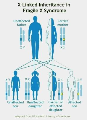 Fragile X Syndrome Inheritance